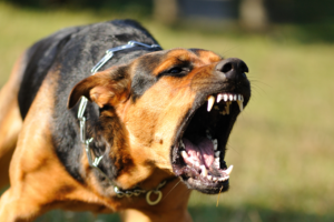 best-utah-dog-bite-animal-attack-injury-accident-attorney-david-laurence-altman-st-george-dog-bite-animal-attack-injury-accident-lawyer
