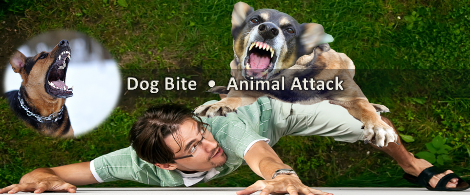 George Dog Bite Animal Lawyer Utah Personal Injury Attorney